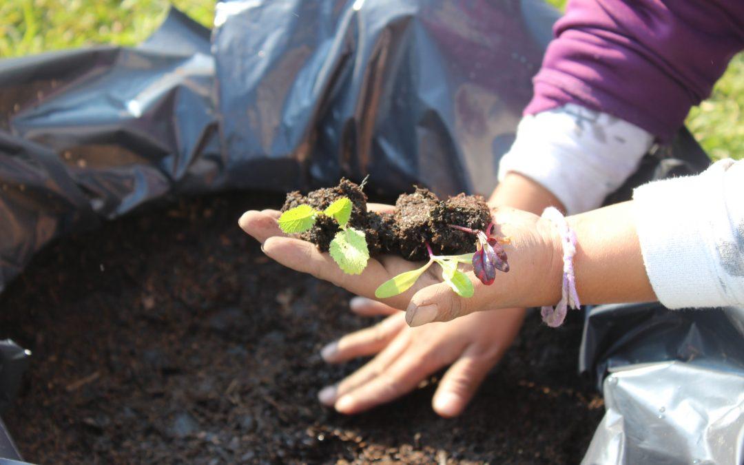 8 claves para ayudar a mejorar el medio ambiente